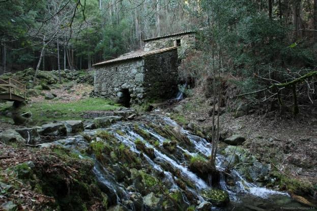 Ruta de los molinos del Folón y el Picón (O Rosal)