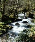 Río Maquiáns (Carballeda de Avia)