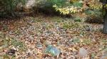 Acumulación de escombros mineros