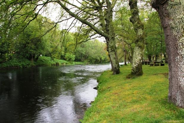 Carballeira de Parga (río Parga)
