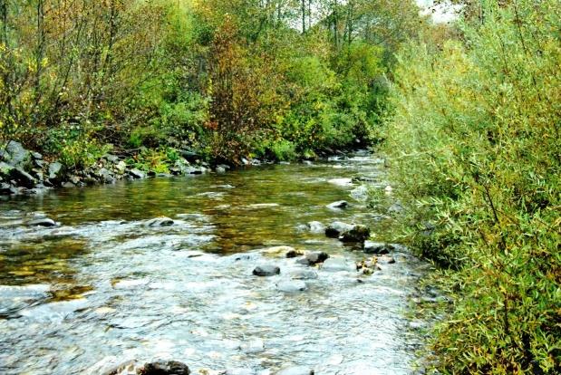 Río Burbia (Parque Natural Ancares Leoneses)