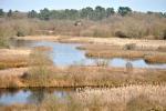 Lagoa de Cospeito (Red Natura 2000 de Galicia)
