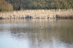 Biodiversidad Lagoa de Cospeito